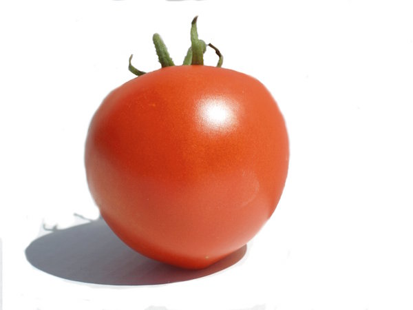organic Tomato grower